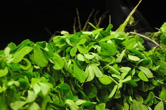 Le Fenugrec une plante pour grossir